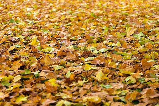 spadlé listí.jpg